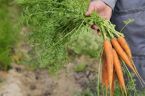 Créaline : l'atelier des légumes les carottes de sable