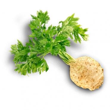 Le c leri branche et le c leri rave l gumes riches en vertus - Comment cuisiner le celeri en branche ...