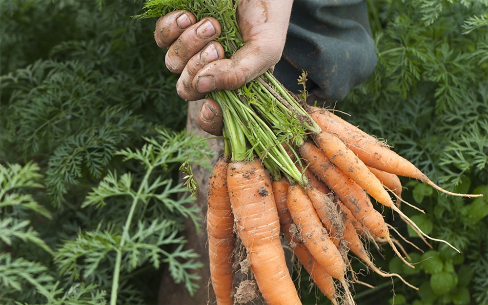 Créaline les soupes, purées, gazpachos et jus de fruits et légumes au rayon frais
