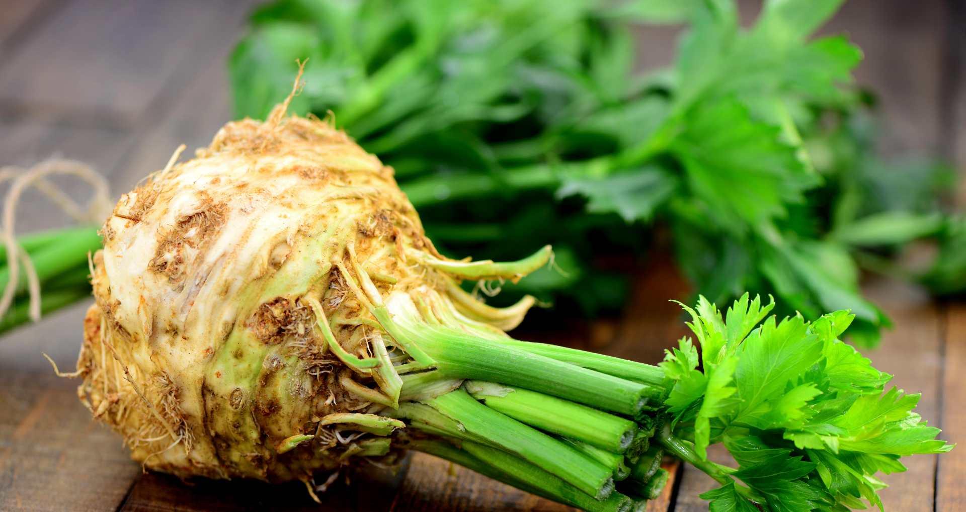 Tout savoir sur le céleri branche et le céleri rave : des légumes pleins de bienfaits
